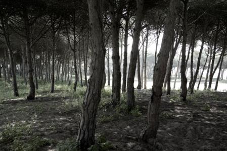 151_woods