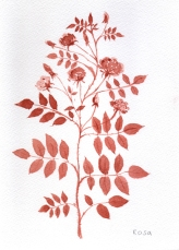 168_redrosa