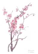 169_blossom_watercolour