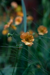 flower23May2019_0058
