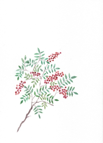 181_watercolour_berries