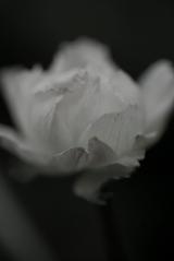 170_vintage_flower